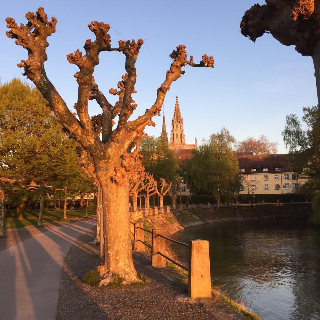 Stadtgarten 4